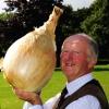 หัวหอมยักษ์ - Ailsa Craig Giant Onion F1