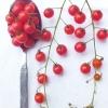 มะเขือเทศสะพูน เล็กสุดในโลก - Spoon Tomato