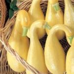 ฟักทองสครอชคอหงส์ สีเหลือง - Yellow Crookneck Squash