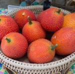 ฟักข้าว - Cochinchin Gourd