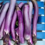มะเขือม่วงย้าวยาว - CA Long Purple Eggplant