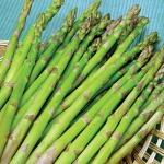 (Whole 1 Oz.) หน่อไม้ฝรั่ง พันธุ์แมรี่วอชิงตัน - Mary Washington Asparagus