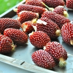 (Whole 1 oz) ข้าวโพดสตรอเบอรี่ - Red Strawberry Corn
