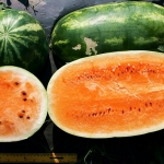 (Whole 1 Oz) แตงโมยักษ์ พันธุ์เทนเดอร์สวีส - Tendersweet Orange Watermelon
