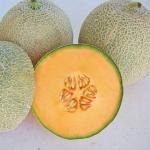 เมล่อน ท็อปมาร์ค - Top Marks Melon