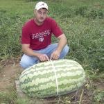 แตงโมยักษ์แคโรไลน่า - Carolina Giant Watermelon