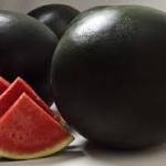แตงโมดำ ซองละ 20 เมล็ด