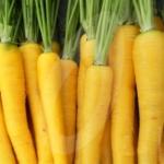 แครอท สีเหลือง - Solar yellow carrot