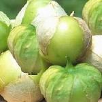 โทมาทิลโล่ สีเขียว - Green Tomatillo