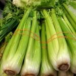 เซเลอรี่ พันธุ์ยูท่า - UTah 5270 Celery