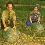 (Big Pack) แตงโมยักษ์ พันธุ์ฟลอริด้า - Florida Giant Watermelon