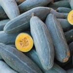 ฟักทองกล้วยสีฟ้า - Guatemalan Blue Banana Squash