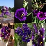 ดอกไลซิแอนธัส สีม่วง 5 เมล็ด/ชุด
