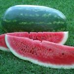 แตงโมพันธุ์คอนโก้ - Congo Giant Watermelon