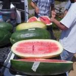 แตงโมยักษ์ พันธุ์คอนโก้ - Congo Giant Watermelon