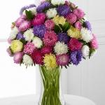 (Whole 1 Oz.) ดอกแอสเตอร์คละสี - Powder Puff Aster Flower