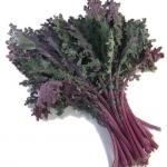 (Whole 1 Oz) เคลแดงรัสเซีย - Red Russian Kale