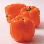พริกหวานยักษ์ สีส้ม 5 เมล็ด/ชุด