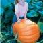 ฟักทองยักษ์ พันธุ์ บิ๊กแม็กซ์ - Big Max Giant Pumpkin thumbnail 4