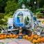 ฟักทองซินเดอเรลร่า - Cinderella Pumpkin thumbnail 3