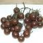 มะเขือเทศเชอรี่สีดำ - Black Cherry Tomato thumbnail 1