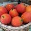 ฟักข้าว - Cochinchin Gourd thumbnail 1