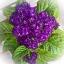 ดอกเฮลิโอโทรเป้ (สกัดทำน้ำหอม) ซองละ 5 เมล็ด thumbnail 1