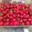 พริกเชอรี่เผ็ด - Hot Cherry Pepper thumbnail 1