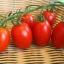 มะเขือเทศริโอ แกรนด์ - Rio Grande Tomato thumbnail 2