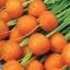 แครอท พันธุ์ปาริเซียน - Parisian Carrot thumbnail 3