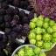 อาติโช้ค สีม่วง - Purple artichoke thumbnail 5