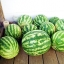 (Whole 1 Oz.) แตงโมคิมสันสวีท - Crimson Sweet Watermelon thumbnail 2