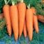 แครอทสีส้ม แดนเวอร์ - Danver Carrot thumbnail 1