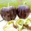 พริกหวานแคลิฟอร์เนียสีม่วง - Purple Sweet Pepper thumbnail 2