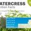 สลัดน้ำ วอเตอร์เครส - Watercress thumbnail 3