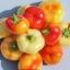 พริกอัลม่าปาปิก้า - Alma Paprika Pepper thumbnail 1
