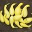 ฟักทองสครอชคอหงส์ สีเหลือง - Yellow Crookneck Squash thumbnail 2