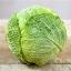 กะหล่ำปลี ซาวอย - Savoy cabbage thumbnail 3