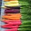 แครอทคละสี - Mixed Rainbow Blend Carrot thumbnail 2