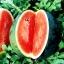 (Whole 1 Oz) แตงโมยักษ์ พันธุ์ฟลอริด้า - Florida Giant Watermelon thumbnail 2