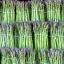 (Whole 1 Oz.) หน่อไม้ฝรั่ง พันธุ์แมรี่วอชิงตัน - Mary Washington Asparagus thumbnail 2