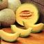 แคนตาลูป อิมพีเรียล45 - imperial 45 cantaloupe thumbnail 1