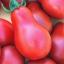 มะเขือเทศลูกแพร สีแดง - Red Pear Tomato thumbnail 1