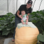 (Whole 1 oz) ฟักทองยักษ์ พันธุ์แอตแลนติก - Dill Atlantic Giant Pumpkin thumbnail 3