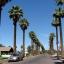 ปาล์มแคลิฟอร์เนีย - California Palm thumbnail 3