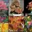 คัตซึระ ซองละ 5 เมล็ด thumbnail 1