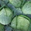 กะหล่ำปลี ซาวอย - Savoy cabbage thumbnail 1