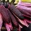 ข้าวโพดสีม่วงจีน เฮ่ยนัว - Heinuo Purple Corn thumbnail 1