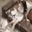DR-LR-133 Lady Clare Classic Elegant Pearl Lace Dress thumbnail 6