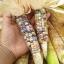 ข้าวโพดพลอย - Glass Gem Corn thumbnail 1